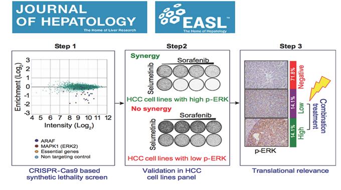 覃文新研究组与René Bernards教授团队合作发表肝癌治疗新策略论文